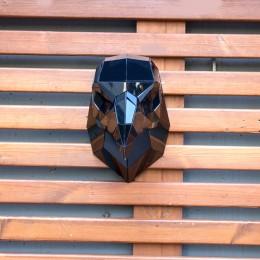 nigrum aquilae / Siyah Kartal Başı