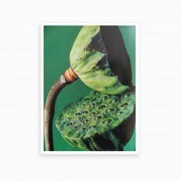 Duvar  İçin Resim  Çiçek ve Tohumu 35x25 cm