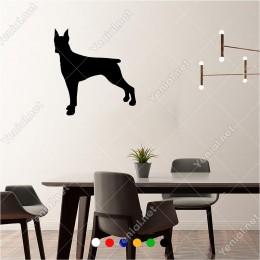 Dikkatli Şekilde Doperman Köpeği 60x60 cm Duvar Sticker